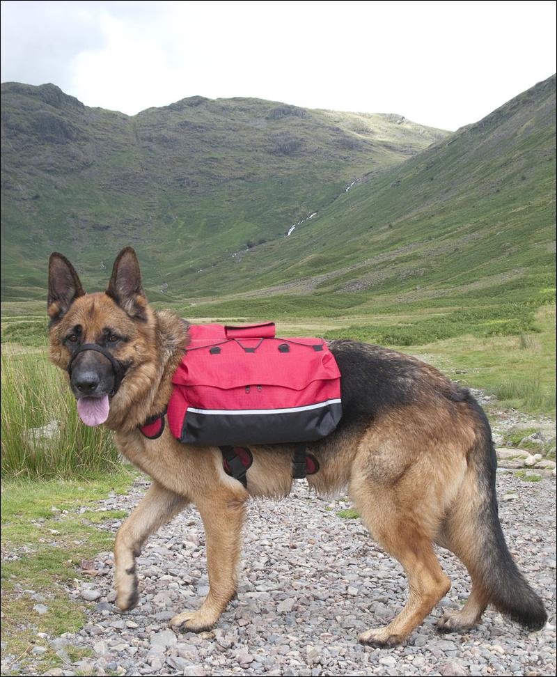 DOG BACK-PACK PANNIERS SADDLE-BAG camouflage camoflage pink large ...