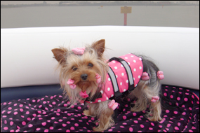 Toy Polka Dot Dotless Dog Life Jacket Cat Lifejacket