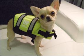 Tiny Polka Dot Or Dotless Dog Life Jacket Lifejacket Ebay